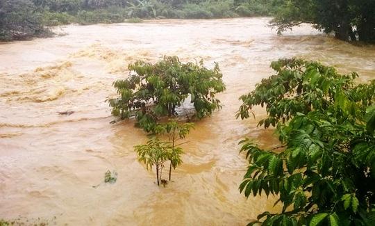 Nhiều người dân chưa kịp thu dọn cà phê đã bị nước lũ nhấn chìm.