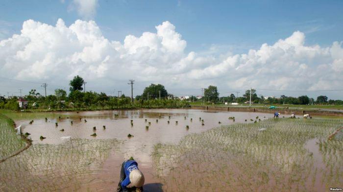 Mở rộng hay xóa bỏ hạn điền là xu thế chung của thế giới, nền nông nghiệp Việt Nam không thể nào phát triển được với diện tích đất của từng hộ gia đình nhỏ lẻ, manh mún như hiện nay.